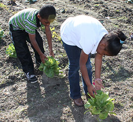 Students tend plants in the garden at North Mitchell Elementary.
