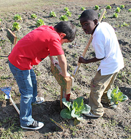 Students add plot identification signs in the garden at North Mitchell Elementary.