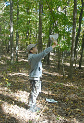 Hermann High student using a clinometer to take measurements in a local wooded area